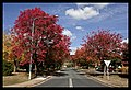 Autumn leaves of Canberra-01 (5855611723).jpg