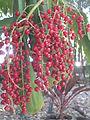 BCBG Berries 04.JPG