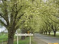 Bacchus Marsh Avenue of Honour.jpg