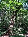 Balade en Forêt de Verrières le 20 août 2017 - 040.jpg
