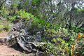 Balade sur une crête au nord de la Réunion.jpg