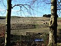Bales between the trees - geograph.org.uk - 1597321.jpg