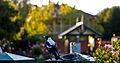 Ballarat Botanical Garden2.jpg
