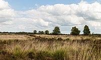 Balloërveld, natuurgebied in Drenthe 012.jpg