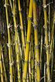 Bamboo (3708256).jpg