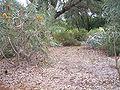 Banksia garden gnangarra.jpg