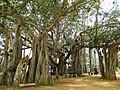 Banyan Mysore 02.jpeg