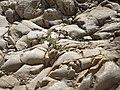 Barakajur rocks 09.jpg