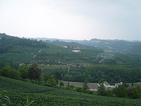 Barbaresco vineyard.jpg