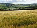 Barley, Boltongate - geograph.org.uk - 901056.jpg