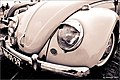 Beetle eyes 2 (5646543269).jpg