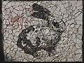 Belgrade zoo mosaic0198.JPG