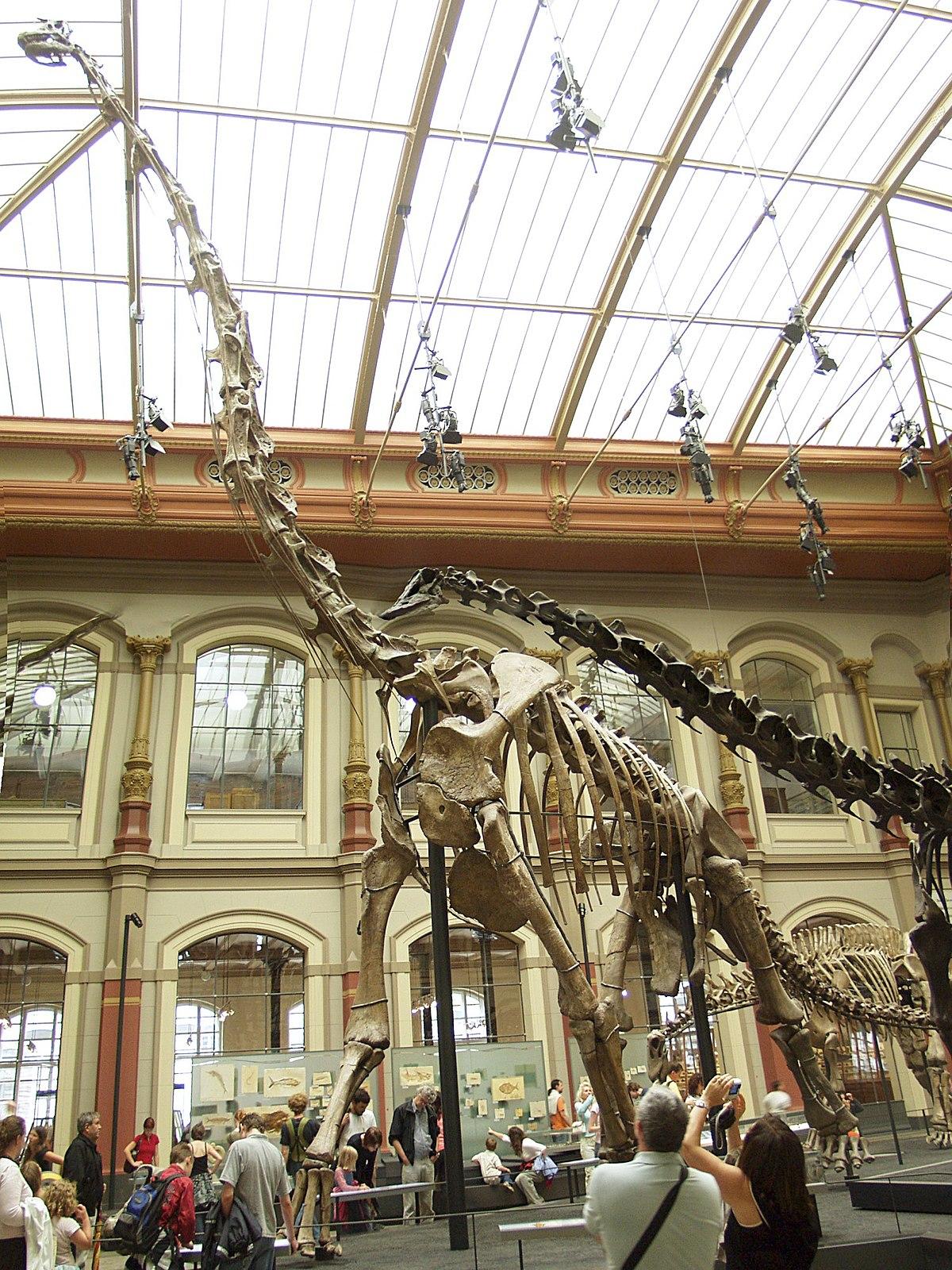 Berlin - Museum für Naturkunde - Brachiosaurus brancai.jpg