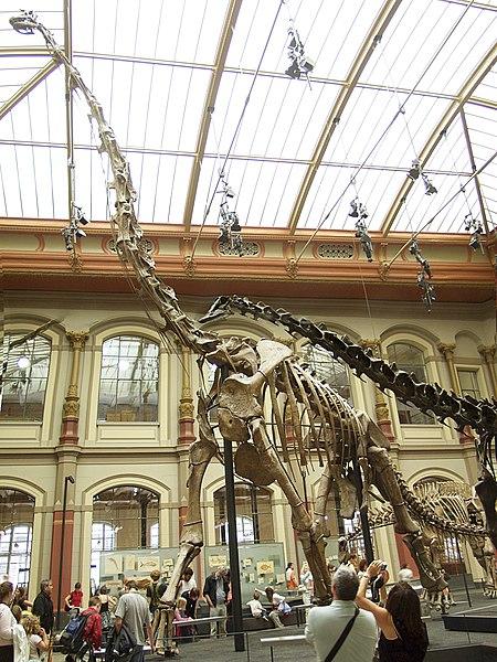 File:Berlin - Museum für Naturkunde - Brachiosaurus brancai.jpg