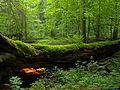 Białowieża National Park, Poland (4664493618).jpg