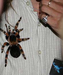 Big spider.jpg
