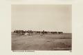 """Bild från familjen von Hallwyls resa genom Algeriet och Tunisien, 1889-1890. """"Biskra (kamelkaravan) - Hallwylska museet - 91947.tif"""