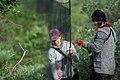 Biologists set up a mist net in Denali (bda8f007-33f3-4417-bc1a-5e55fbe3b083).jpg