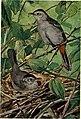 Bird-lore (1913) (14732536876).jpg
