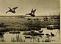 Bird lore (1909) (14568996798).jpg