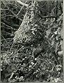 Bird notes (1923) (14754955512).jpg