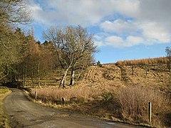 Blackcraig Forest - geograph.org.uk - 722930.jpg