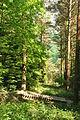 Blanchdown Wood (4966).jpg