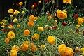 Blossoms-Fremont-CA.JPG