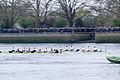 Boat Race 2014 - Main Race (87).jpg
