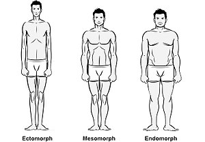 Somatotype and constitutional psychology - Comparison of body types