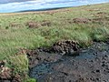 Boggy ground on Woolbist Law - geograph.org.uk - 1465256.jpg