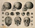 Bones of the skull; nineteen figures. Line engraving by H. W Wellcome V0008465.jpg