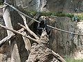 BonoboFishing03.jpeg