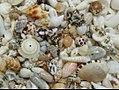 Boracau island sea shells.jpg