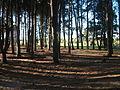 Bosque de kiyú.JPG
