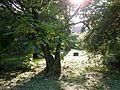 Botanični vrt (3990910886).jpg