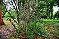 Botanic garden limbe8.jpg
