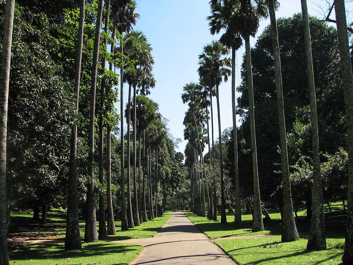 Jardin Botanique De Peradeniya Wikip Dia
