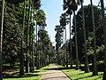 Botanical Garden of Peradeniya 05.jpg