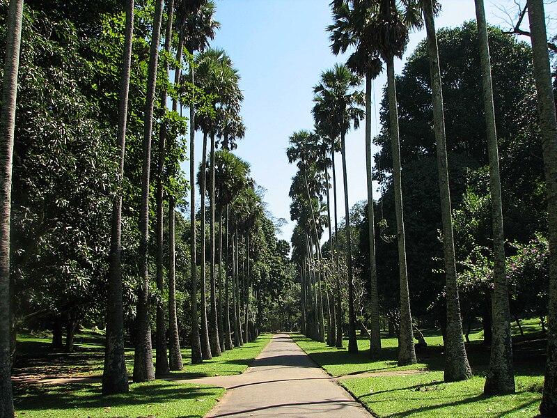 Kandy Botanischer Garten Restaurant Cafe