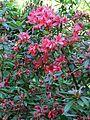 Botanischer-garten-ffm015.jpg