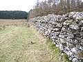 Boundary wall at the edge of Acharossan Forest - geograph.org.uk - 1706654.jpg