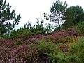 Bournemouth - panoramio - Dawid Glawdzin (1).jpg