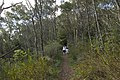 Bowral NSW 2576, Australia - panoramio (126).jpg