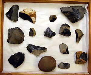 Eartham Pit, Boxgrove - Tray of Boxgrove flints (not on display) at the British Museum