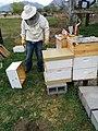 Brad Hanks beekeeping setup.jpg