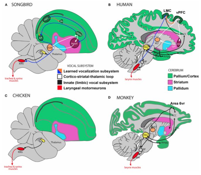 File:Brain Comparisons.tiff