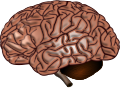 Brain Surface.SVG