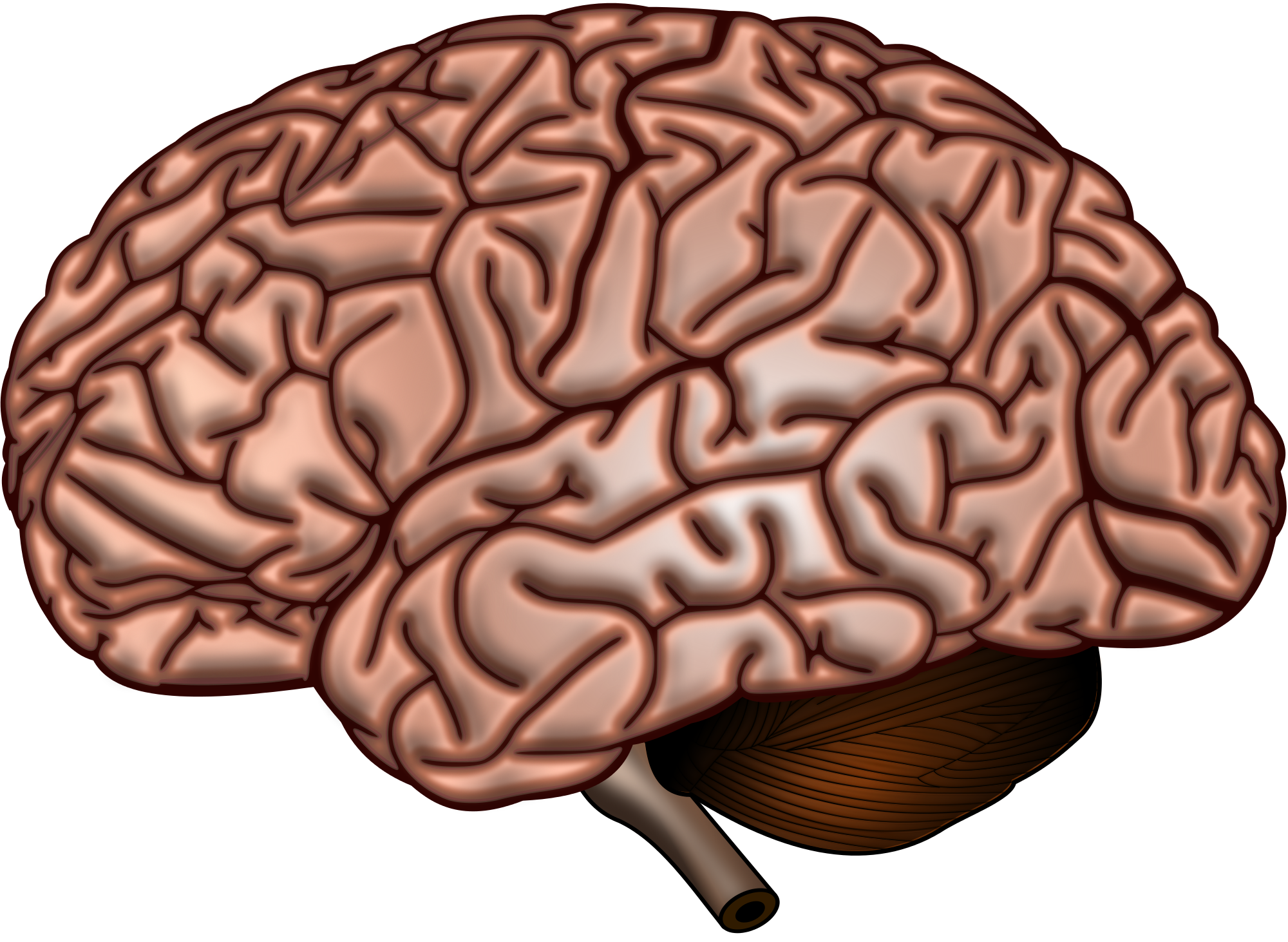 Commons:Featured picture candidates/File:Brain Surface.SVG ...