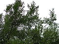 Bresnička reka 7.JPG
